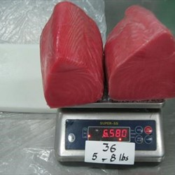 Yellowfin Tuna Loin Co Treated