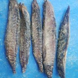 Dried Fish Tuna