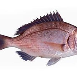 Fish Red Seabream