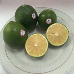 Lime Seedless