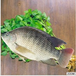 Frozen Tilapia Wholesale Price