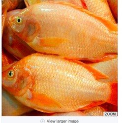 Fish Farming Red Frozen Tilapia