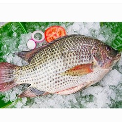Hot Sale Whole Round Frozen Black Tilapia