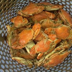 Blue Crab Whole Cooked