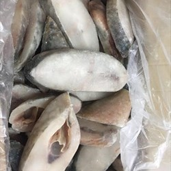 Frozen Parrot Fish Steak