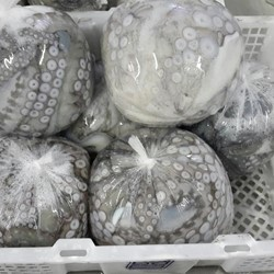 Octopus Ball type Whole cleaned IQF