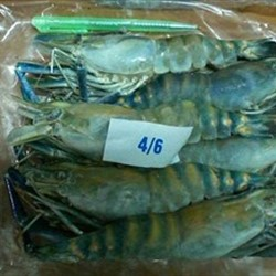 Frozen Fresh Water Shrimps (scampi)