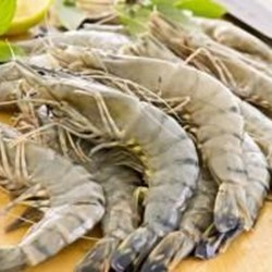 Raw Black Tiger Shrimp (shellon)
