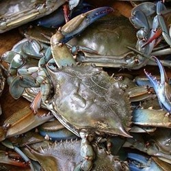 Blue Swimming Crabs