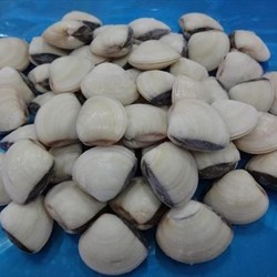 Frozen Cooked Whole White Clam Shell On