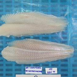 Pangasius fillet, un - trimmed and well - trimmed , STPP