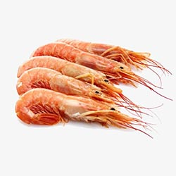 Frozen Argentinian Shrimps